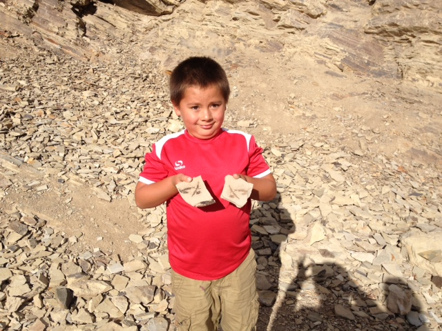 Proudly display the fossils you find at Boothill Fossil Site.