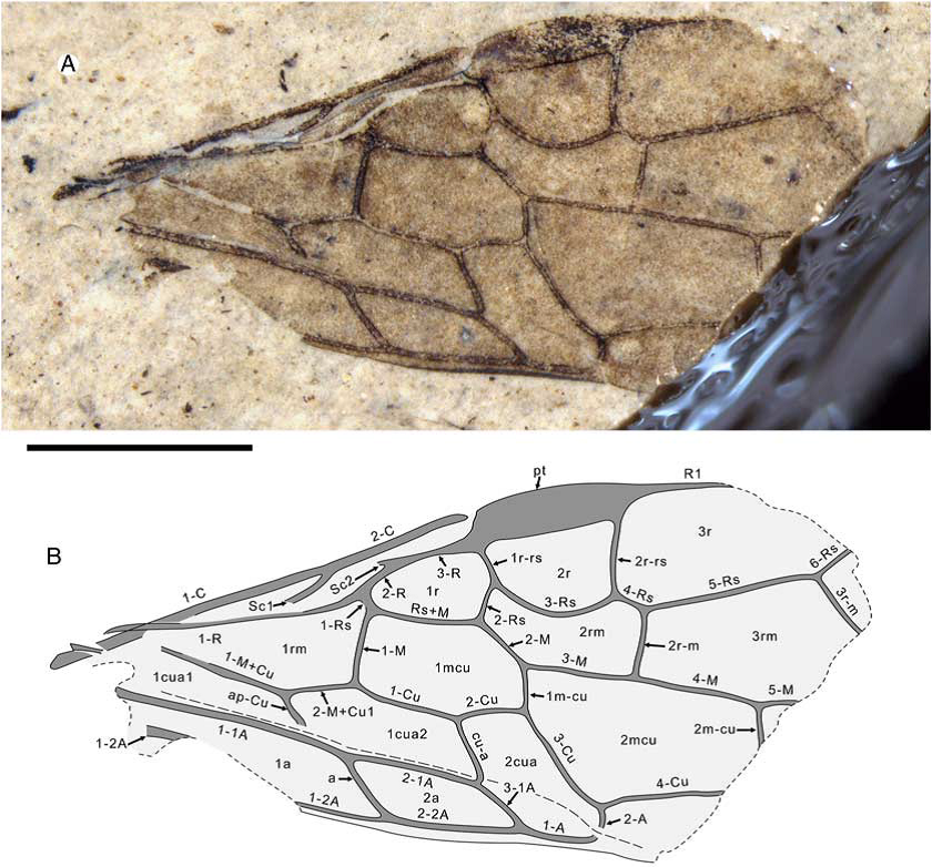 New Genus, New Species from Republic