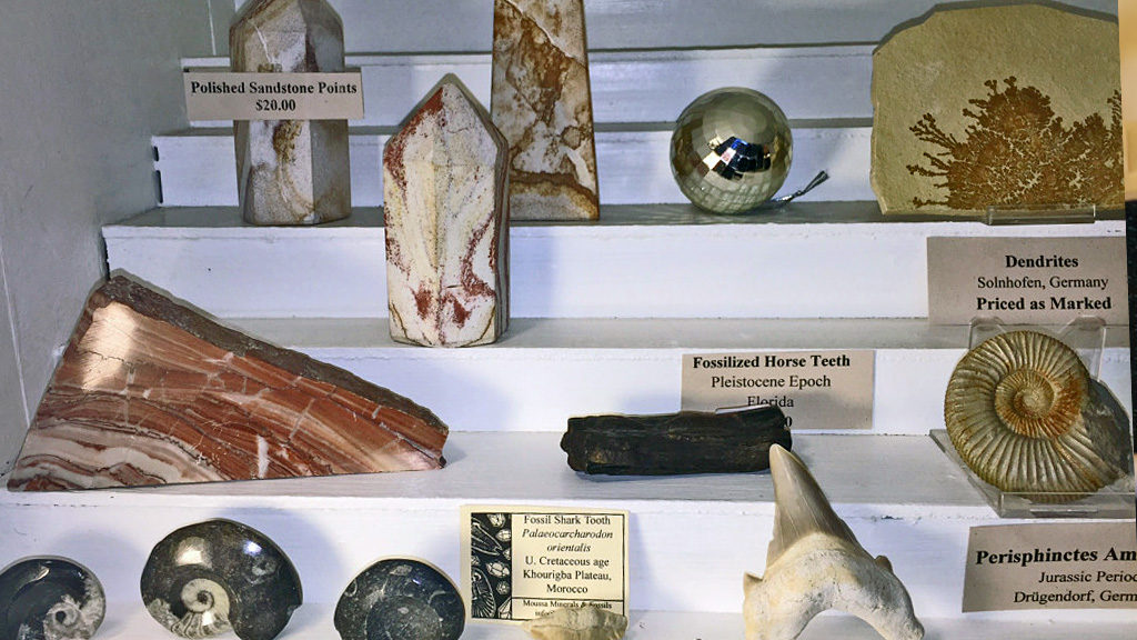 Fossils and specimens in all shapes and sizes, from all over the world