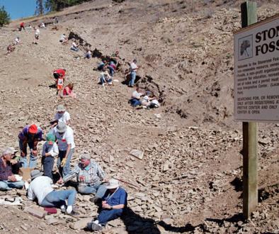 Stonerose Fossil Bed