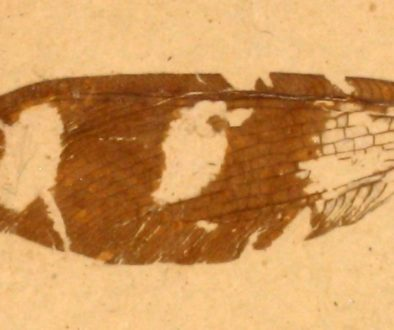 Neuroptera_Lacewing